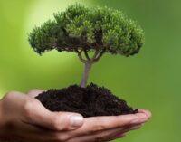 У Британії висаджуватимуть втричі більше дерев для запобігання кліматичної катастрофи