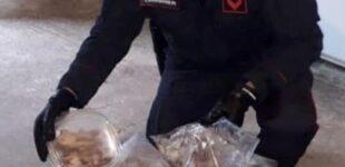 В Італії на плантації наркотиків знайшли 235 мертвих сонь